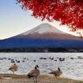 Японська мудрість: прислів`я та приказки