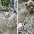Спочатку він подумав, що собака просто сидить в грязі, але підійшов і жахнувся