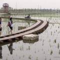 9-А китайська міжнародна садові виставка в пекіні (12 фото)