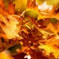 Колір осені (21 фото)