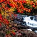 Художниця осінь. Чому жовтіє листя (20 фото)