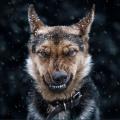 Експресивні портрети тварин фотографа сергія полюшко