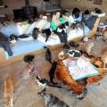 Як живе жінка, у якої більше тисячі котів