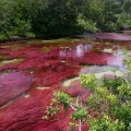 Каньо-крісталес - найкрасивіша річка на землі