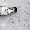 Новини дня в фотографіях: перший сніг в красноярську, фестиваль «дуссехра», тиждень моди в києві (10 фото)