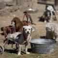 Притулок для кинутих собак з обмеженими можливостями (3 фото)