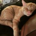 «Найсумніший кіт» перетворився всього через годину після того, як йому знайшли новий будинок