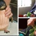 Найстаріший 109-річний чоловік альфі дейт з австралії в`яже светри для поранити від розливу нафти пінгвінів.