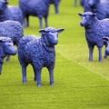 «Сині вівці» в майнці (3 фото)